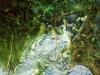 Nel-fiume